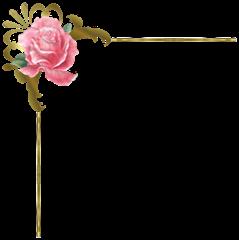 vectorial rosa